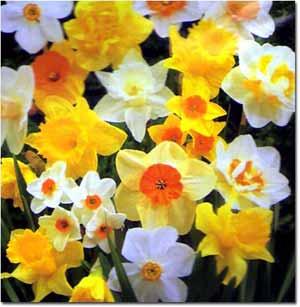 new zealand gardening calendar