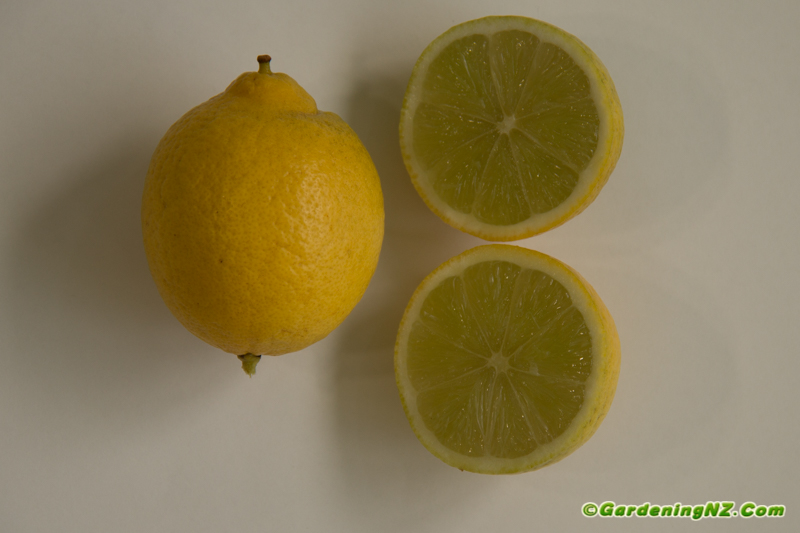 Best Citrus Varieties