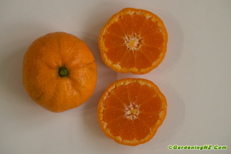 Best Mandarin varieties